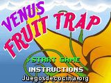 Venus Fruit Trap