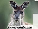 Puzzle Canguro